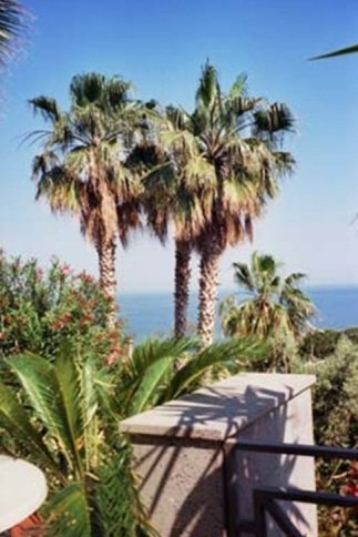 View of palm trees and the sea from a terrace