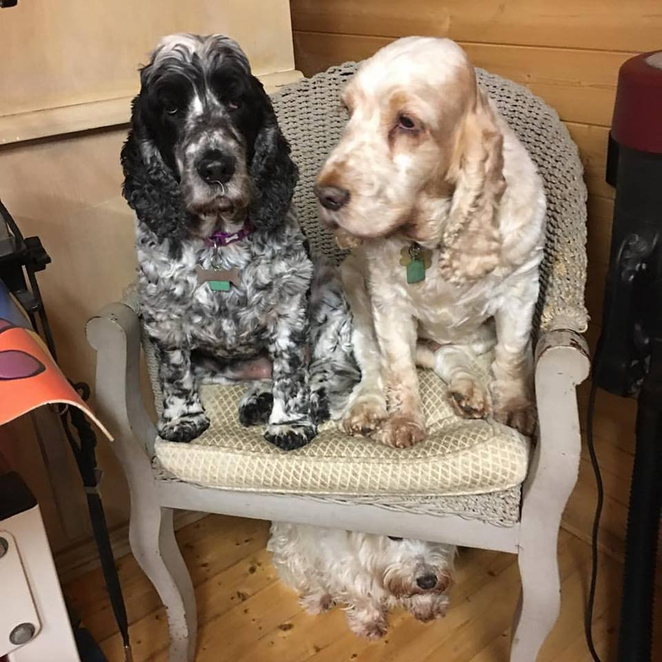 Dogs sitting on a chair
