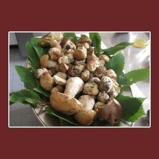 Funghi-freschi