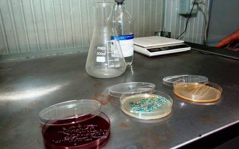 analisi immunologia clinica