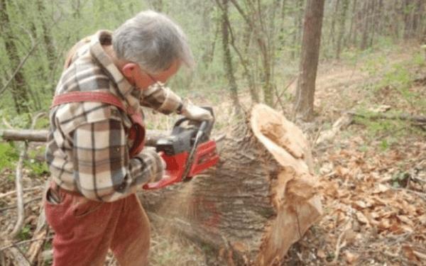 Choix du bois