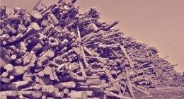 tronchi di legna da ardere