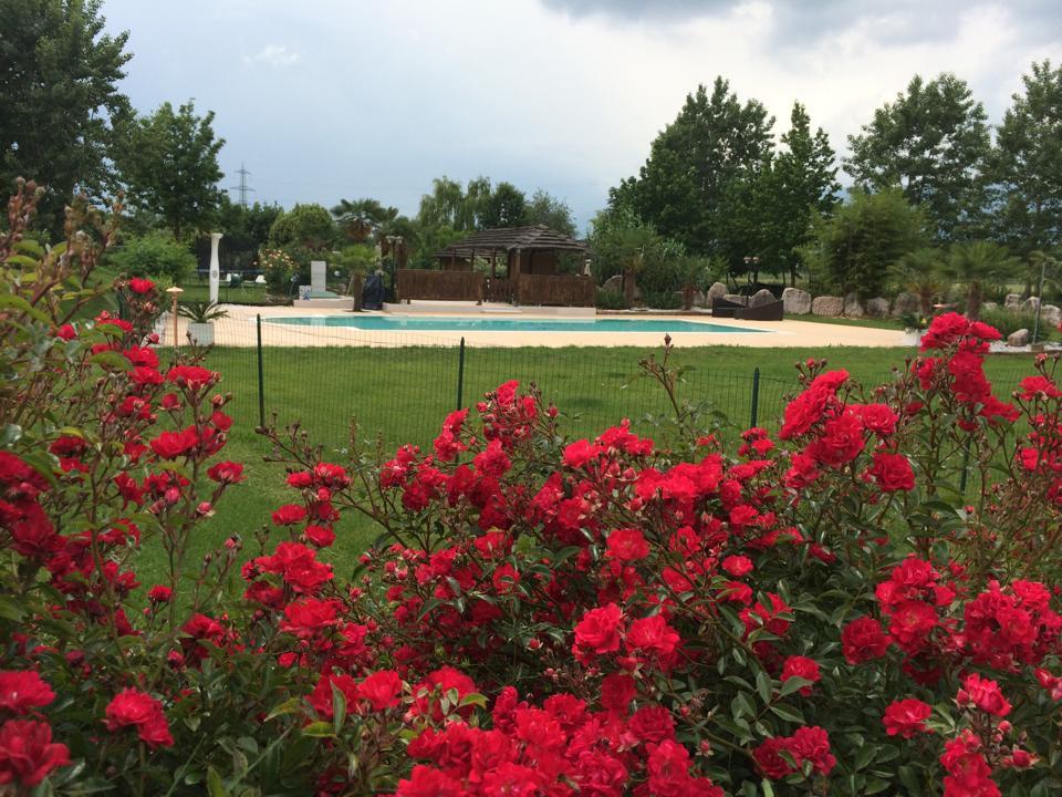 fiori rossi con piscina