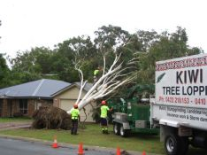 kiwi tree lopping storm damage and emergency