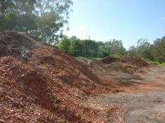 kiwi tree lopping mulch sales brisbane