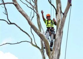 kiwi tree lopping expert