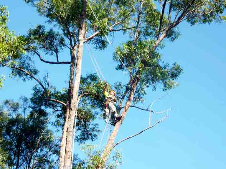 tree removal application gold coast