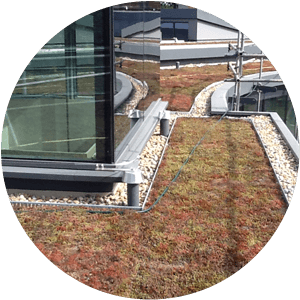 A newly planted green roof