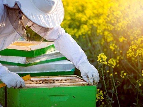 Vendita attrezzi per apiario