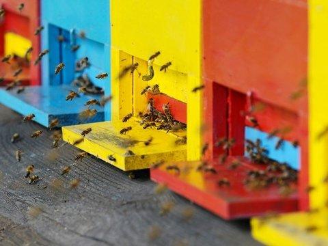 Vendita antiparassitari per api