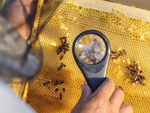 Vendita prodotti di ferramenta per apicoltura