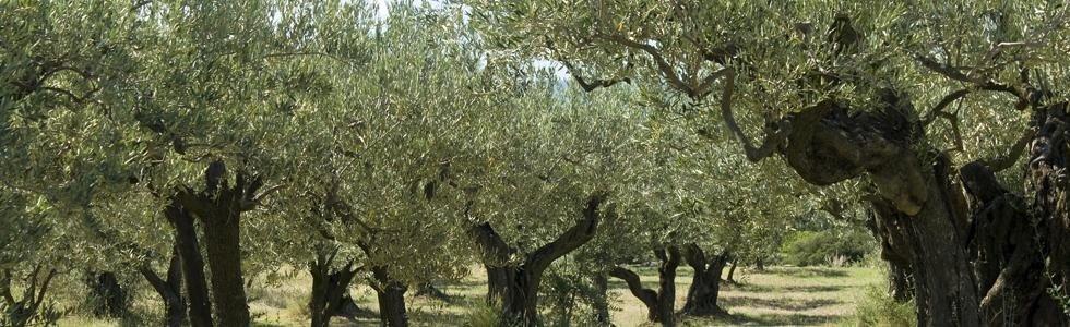 Impianti frutteti Polistena