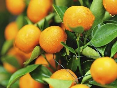 Impianti frutteti