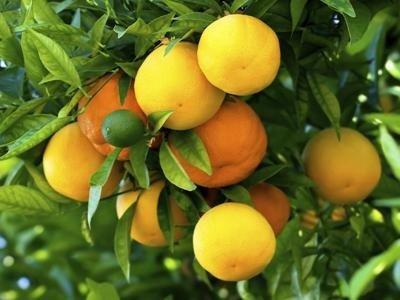 Impianti antigrandine frutteti
