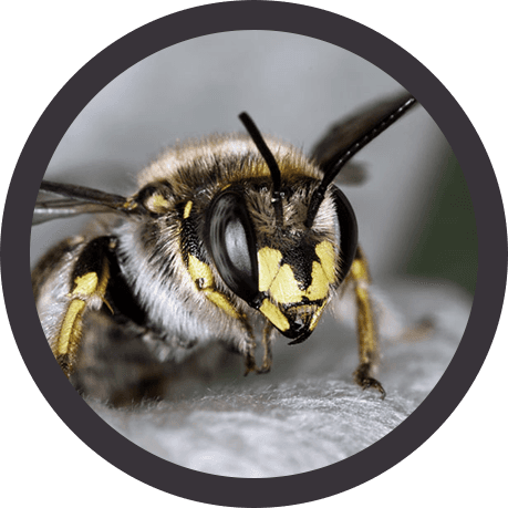 bee and wasp removal