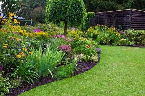 aiuola con fiori e piante curate