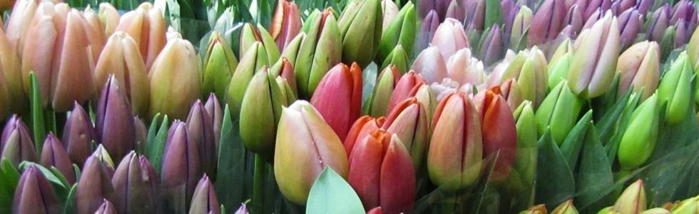 Fiori e piante - Ghisalba