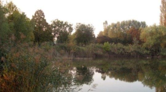 natura, oasi protetta, laghetto