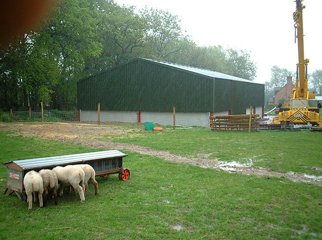 sheds for cattle