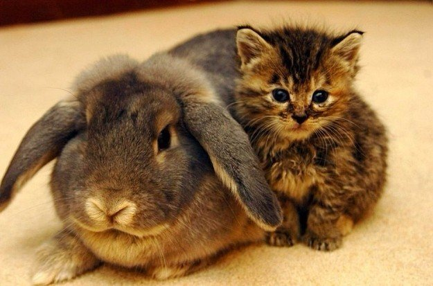 mama-rabbit-takes-in-abandoned-kittens-inspirational
