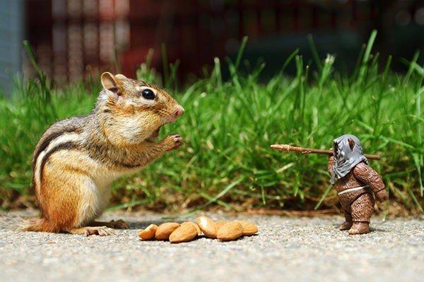 chipmunk-almonds-ewok-starwars-funny-inspirational