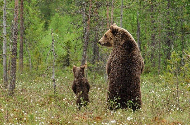 bear-baby-mama-papa-cub-cute-inspirational