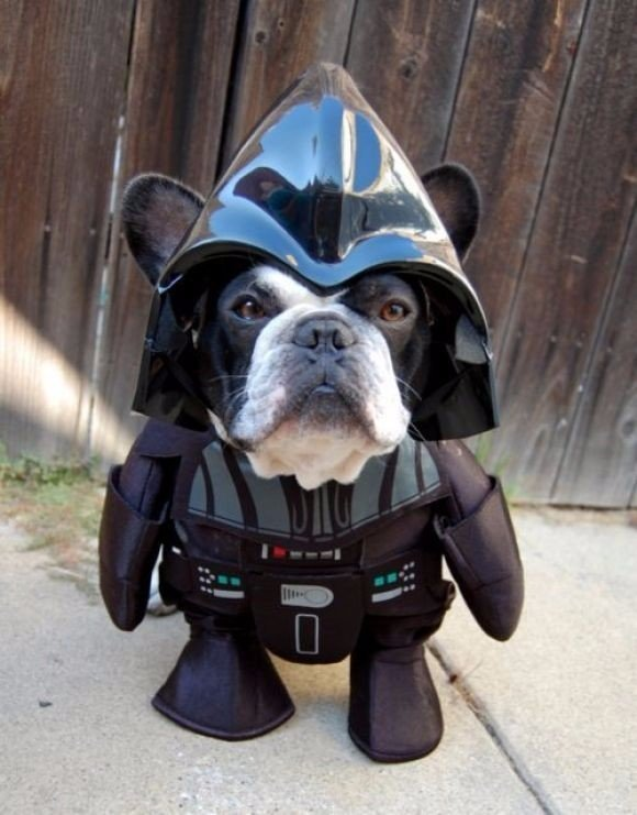 darth-vader-starwars-dog-inspirational