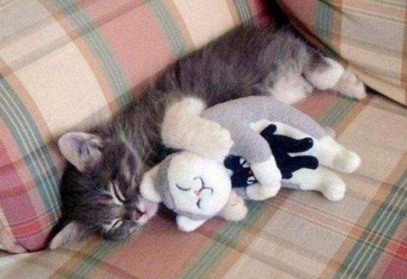 kitten-hugging-kitty-stuffed-cute