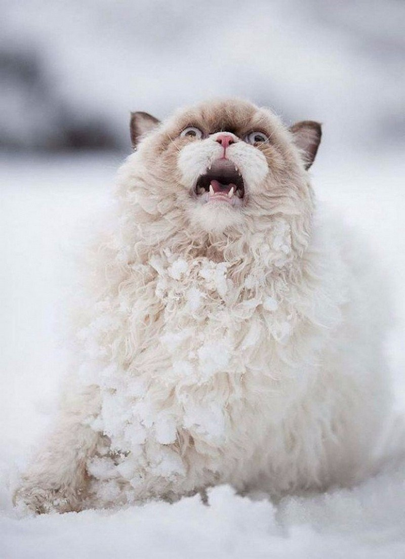horrified-cat-snow-funny-inspirational