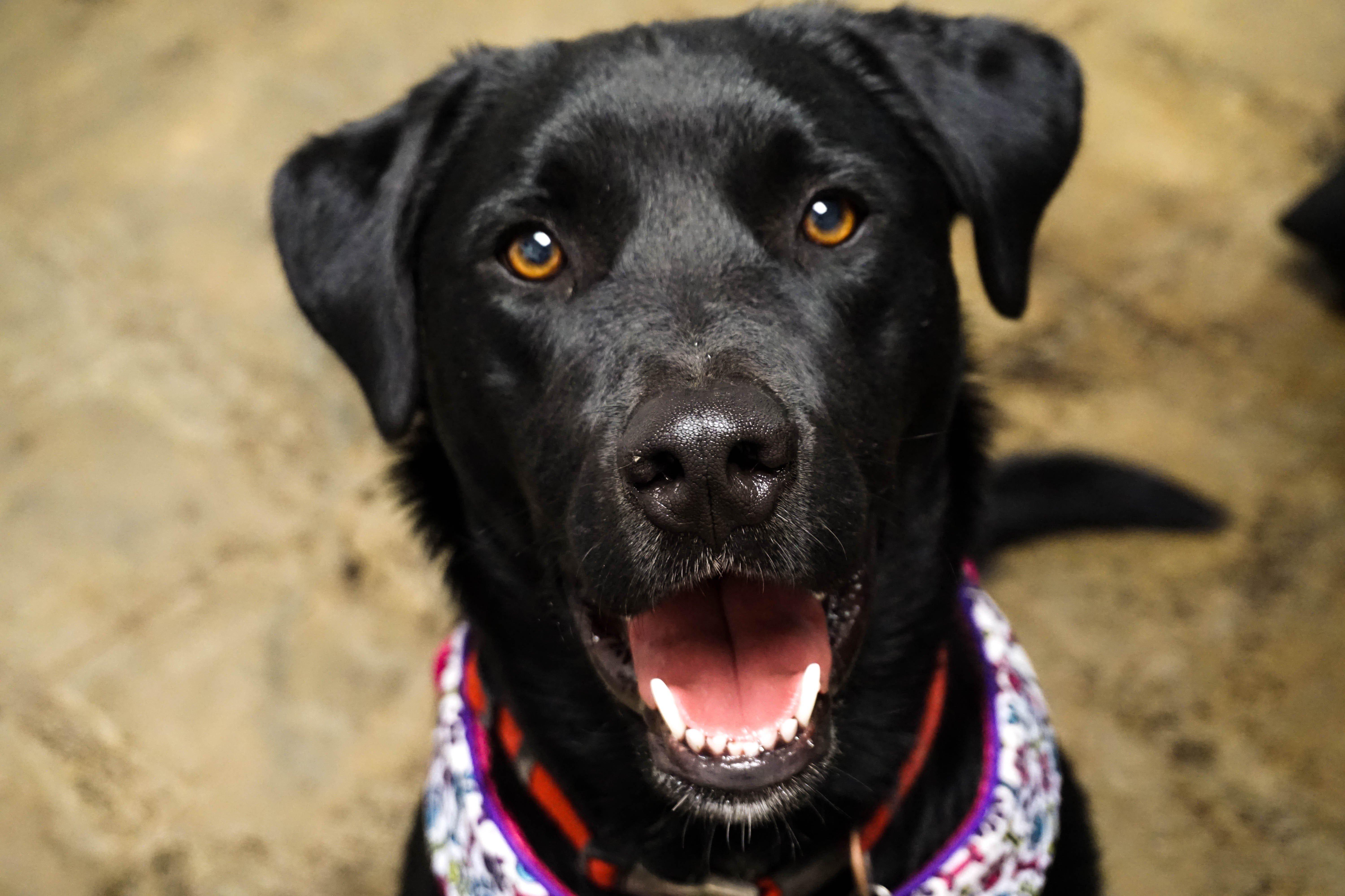 Rudy dog C&B Marketing pet experiment