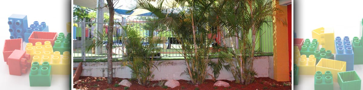 noosaville child care and pre school centre palm tree under red shade