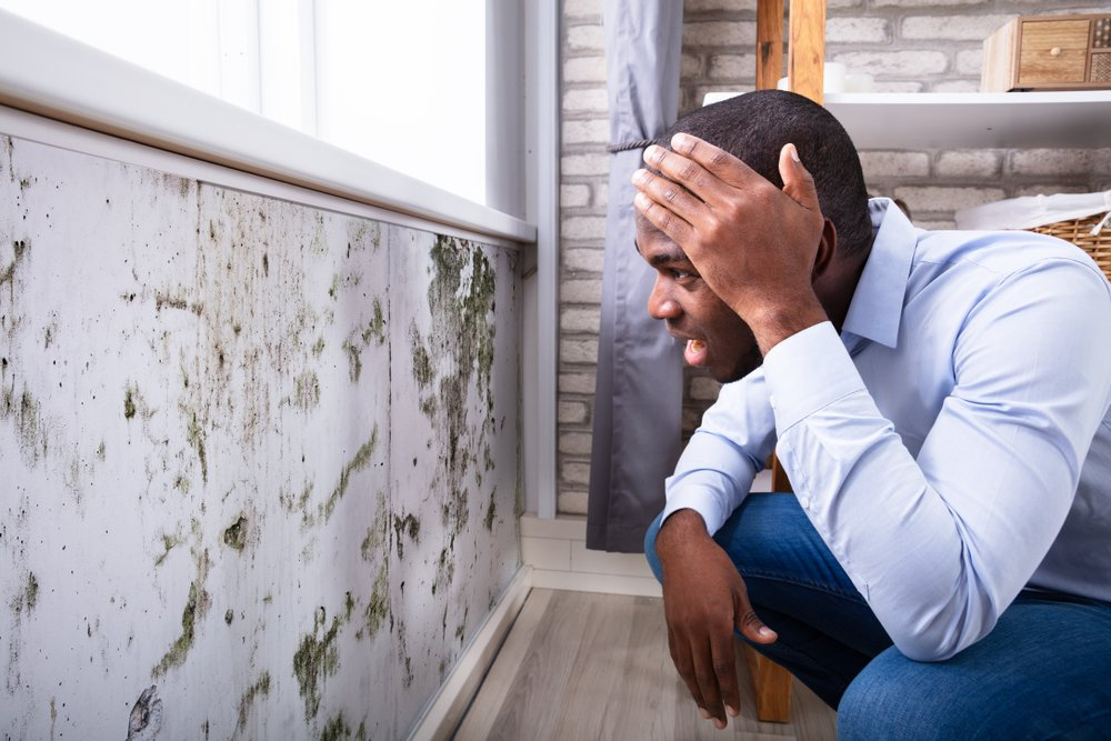 What S The Average Cost Of A Mold Inspection In North Georgia