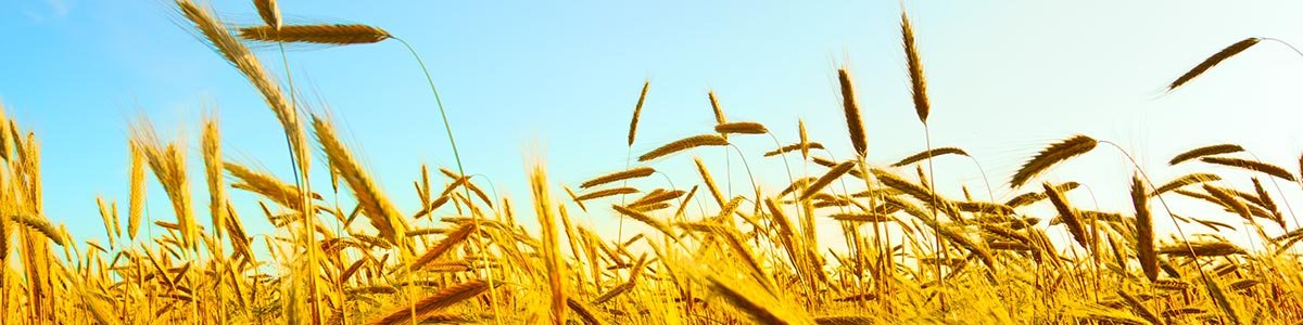 queensland plantation services crops