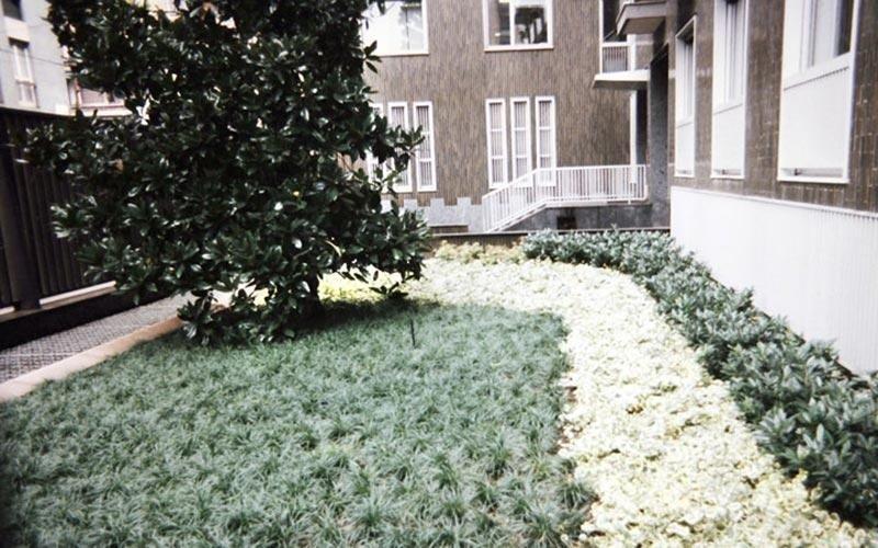Piante per aree verdi