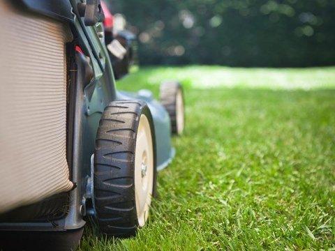 Cura e trattamento del verde