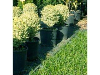 Cura piante ornamentali
