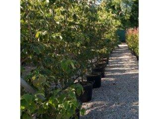 Manutenzione periodica di giardini