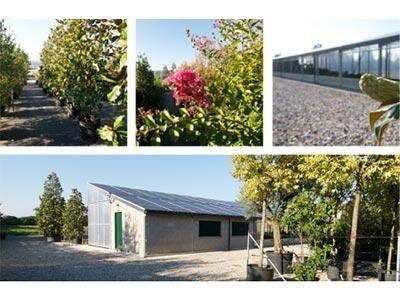 Giardinaggio e verde ornamentale