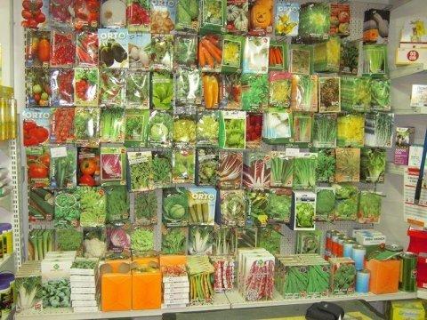 semi piante orto