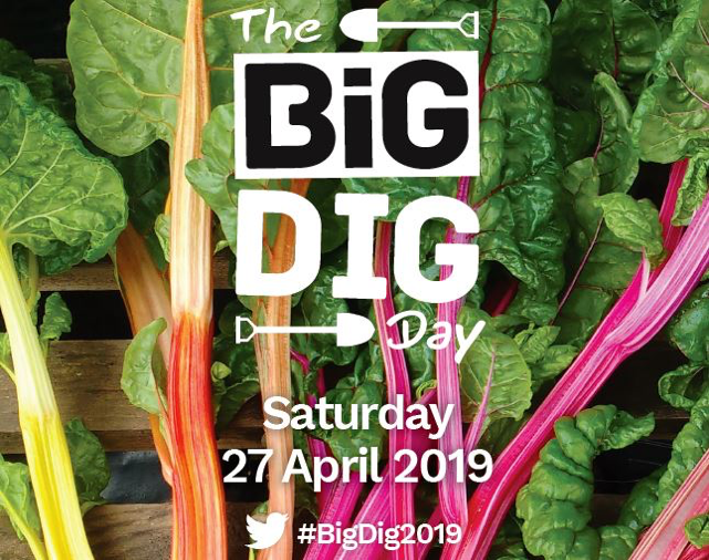 big dig day