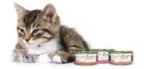 gatto con scatolette
