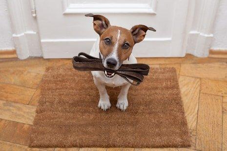 cane consegna il guinzaglio al proprietario