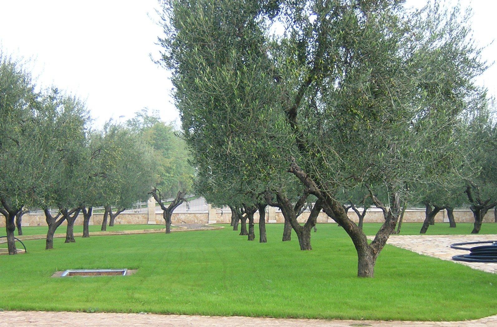 Giardino ben curato con alberi