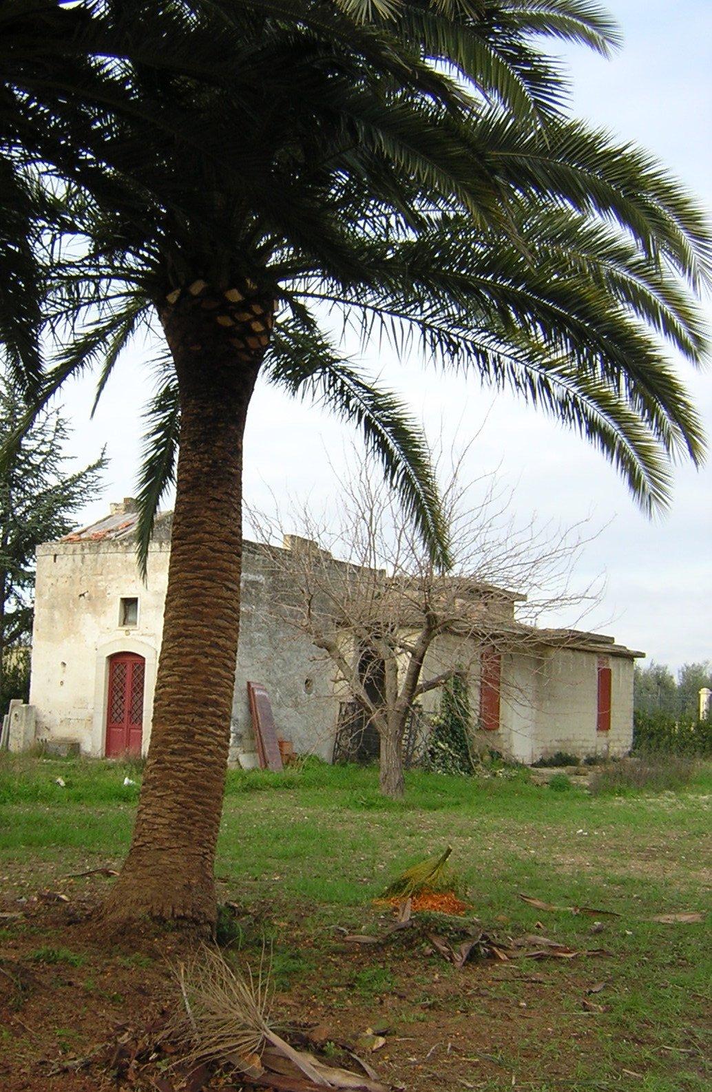 Una palma potata in un giardino