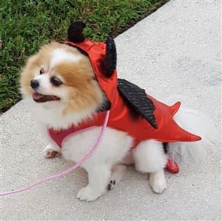 Pom dev costume for Halloween