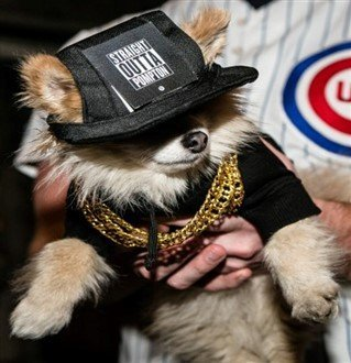 winner - most amusing costume on pomeranian