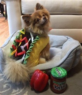 pomeranian-in-taco-costume