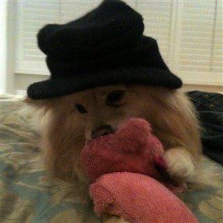 Pom in hat