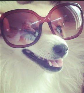 Pom in sunglasses