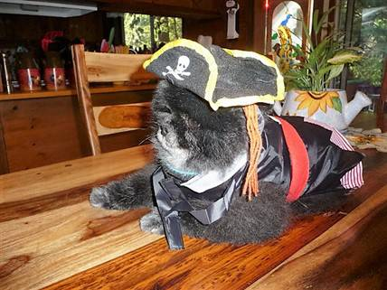 pirate-costume-on-pomeranian